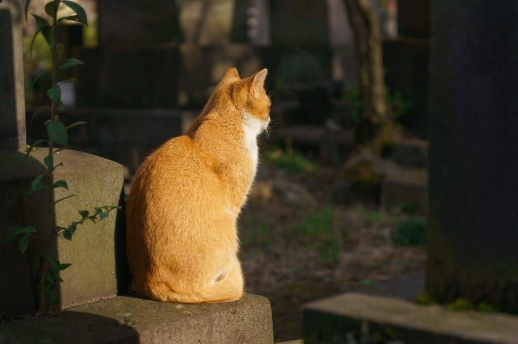 猫背ネコゼうるさいニャ